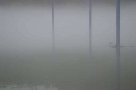 fog with poles
