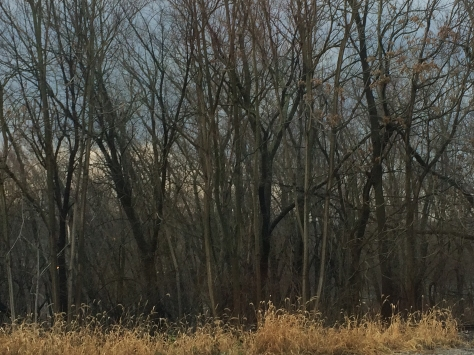 bare trees and scrub grass