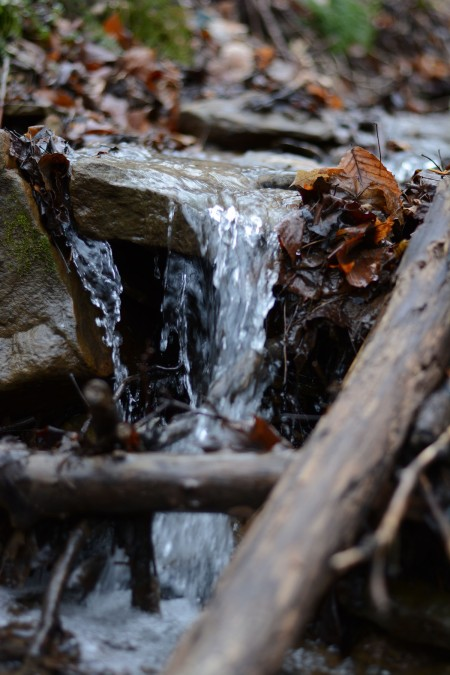 tiny water in forest