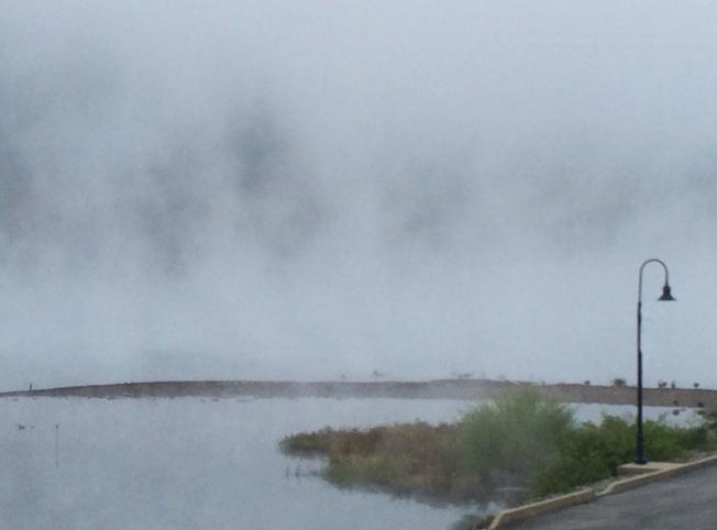 geese water in fog
