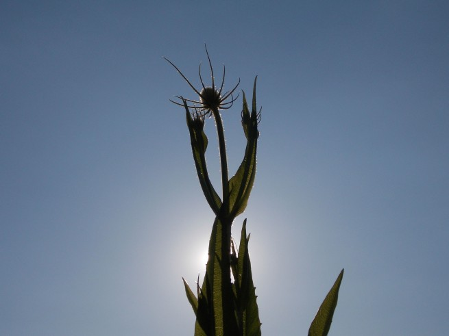 plant against blue sky