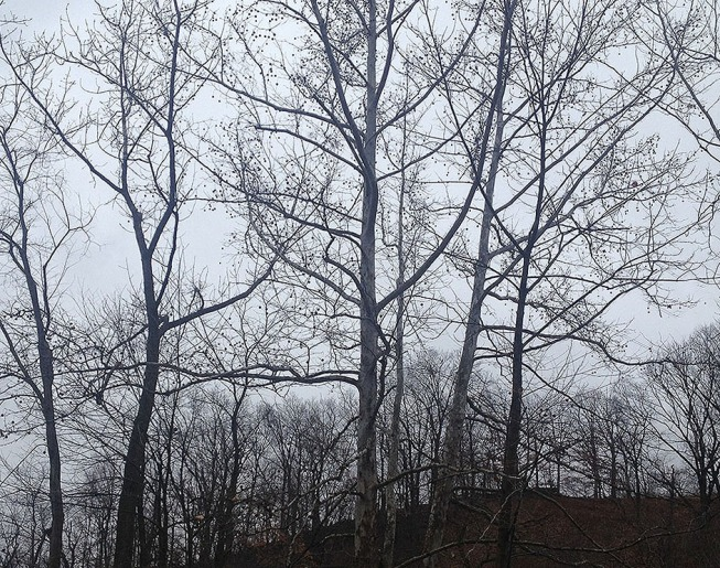 trees in winter sky