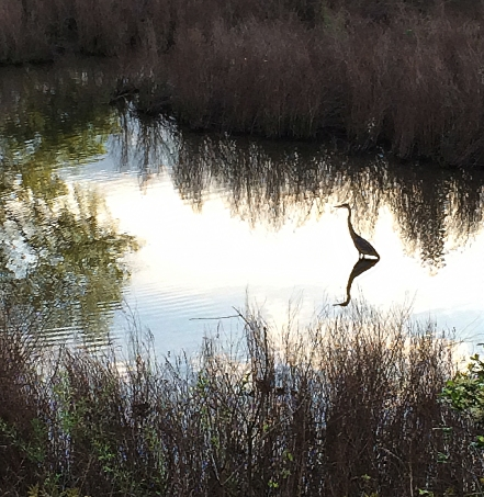 heron and reflections2