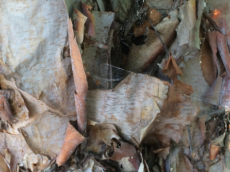 bark and spider web2
