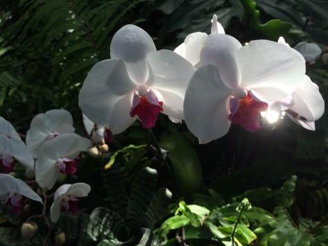 orchids through light