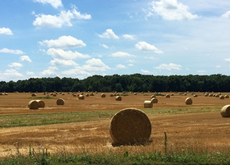 rolls of hay in ohio