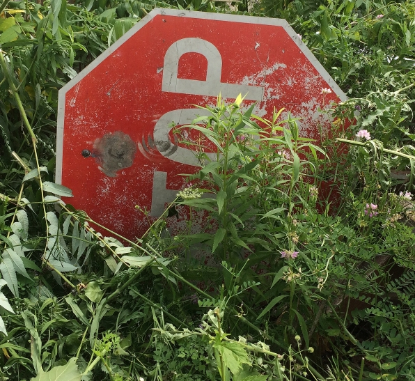 stop sign in weeds