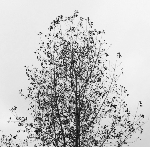 tree-with-falling-leaves