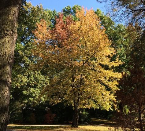 fall-trees2