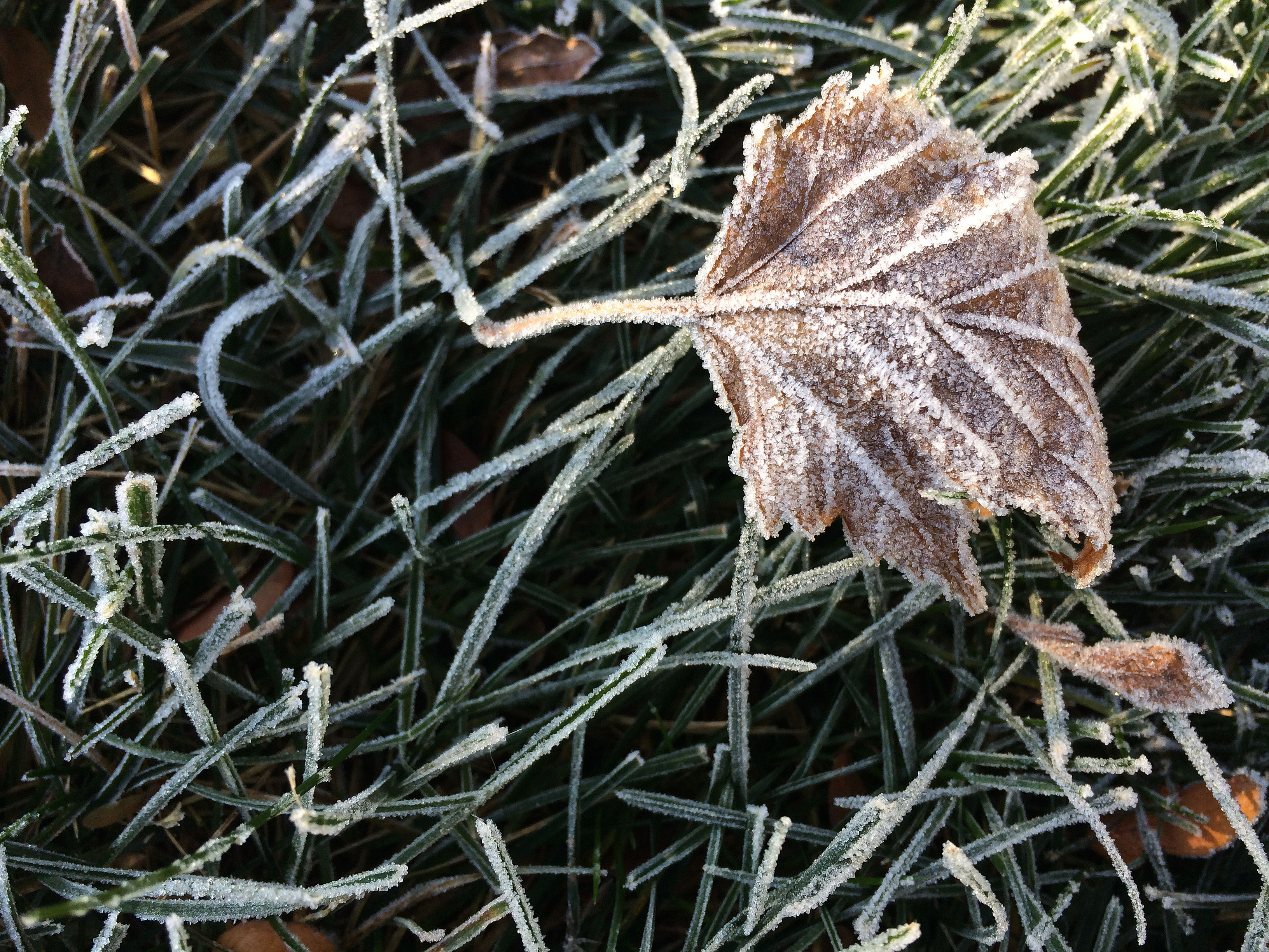 frost-on-a-leaf-in-grass