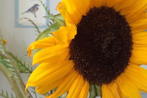 sunflower-w-bird-background