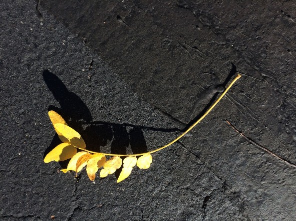yellow-leaf-on-black-top2