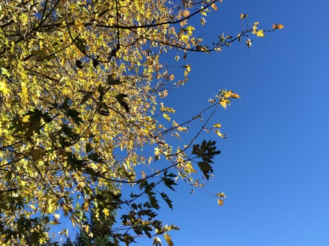 yellow-leaves-and-blue-sky