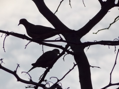 silhouette-doves