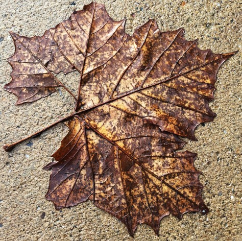 wet-leaf-on-concrete
