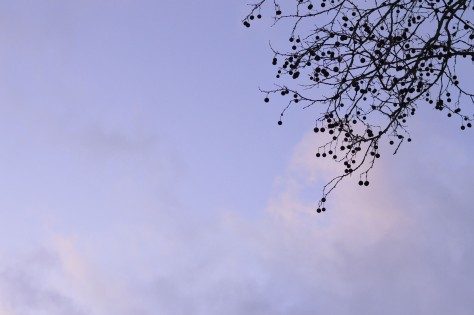 blue-pink-sky-w-tree-in-corner