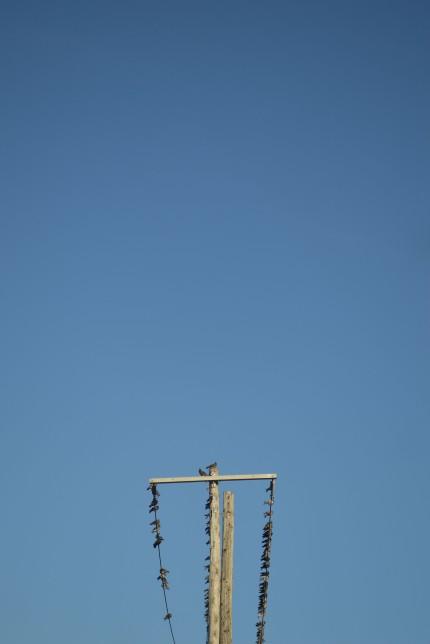blue-sky-birds-on-pole