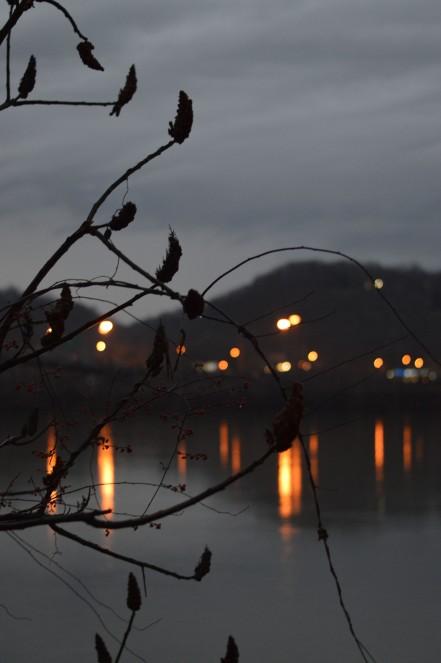 reeds-against-lights-at-dusk