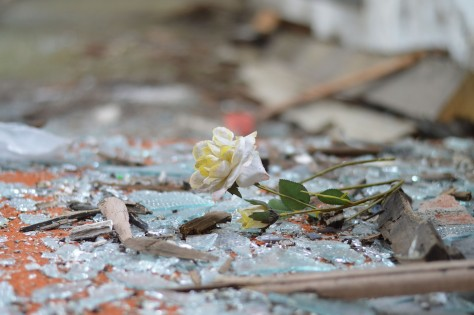 rose-in-debris