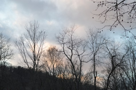 trees-and-sky-winter