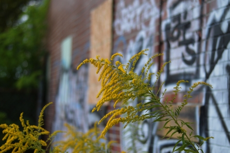 goldenrod grafitti