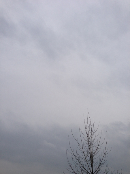 grey skies with tree