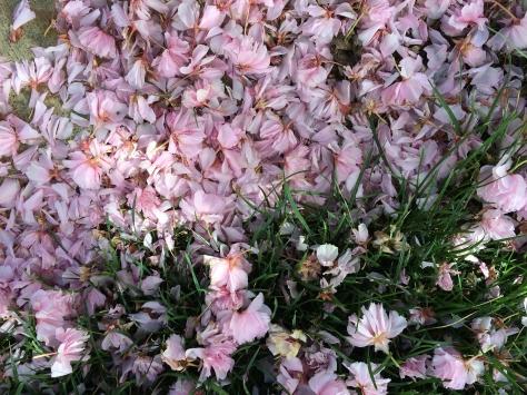 pink petals in grass