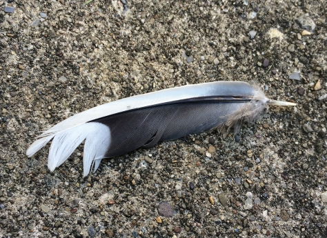 feather on concrete