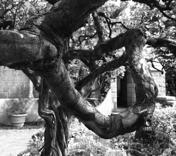 tree blwh