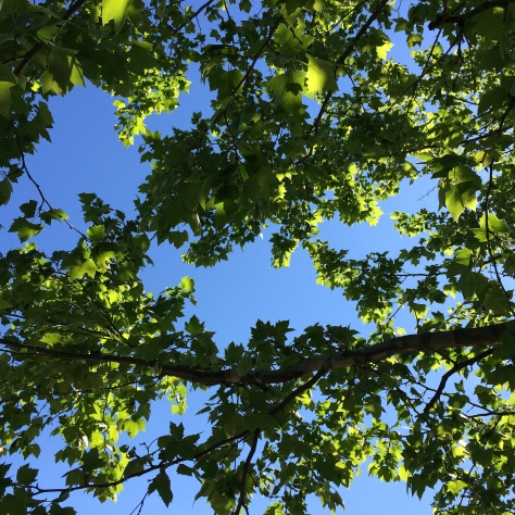 blue skies and green leaves