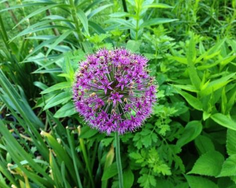 purple flower in greens