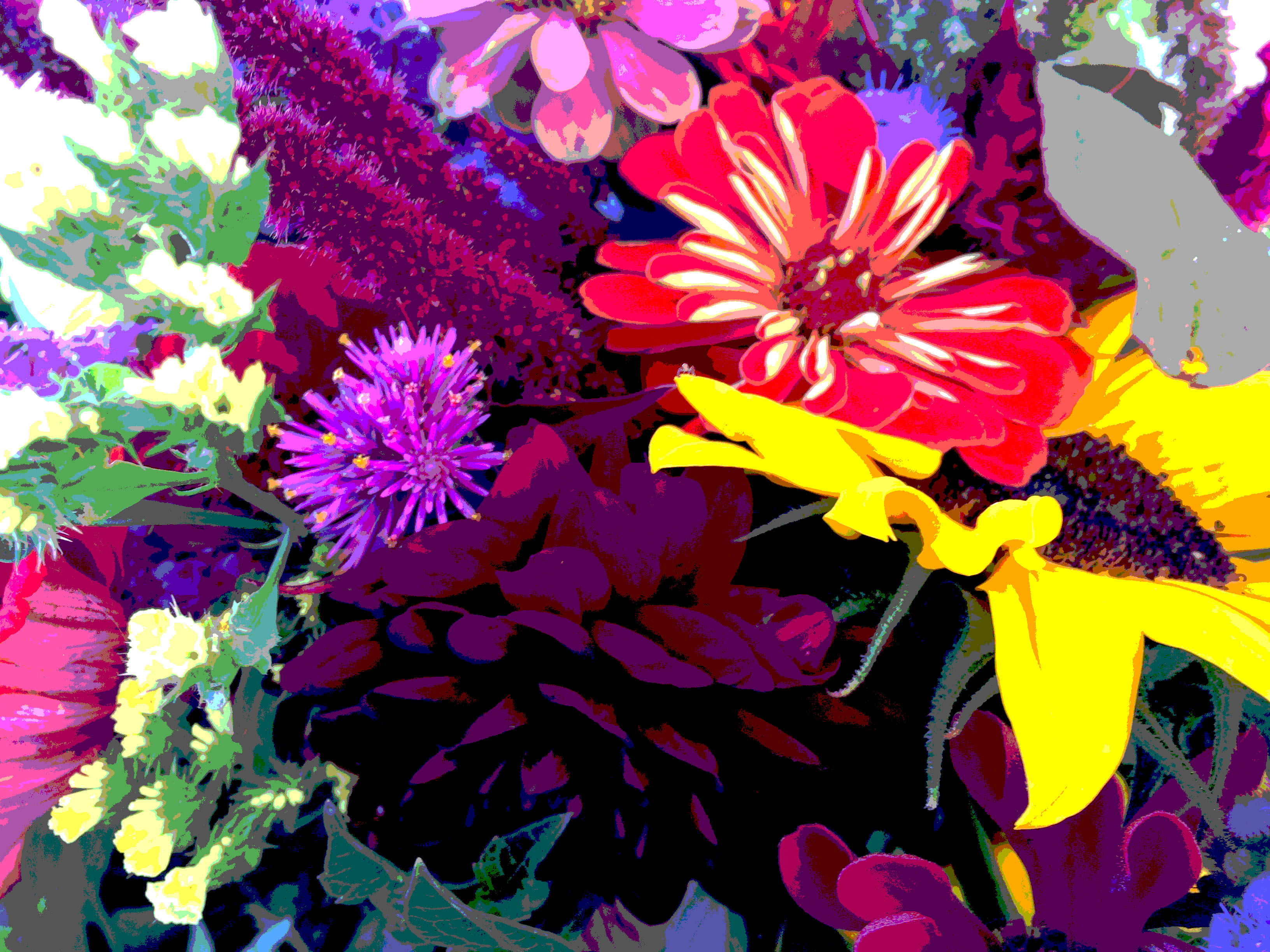 bright flowers posterized
