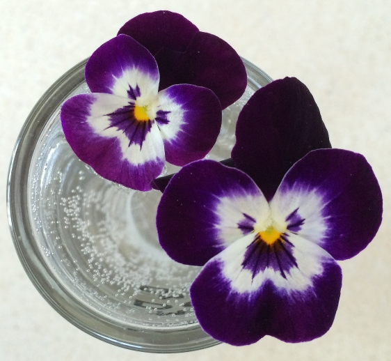 pansies from above