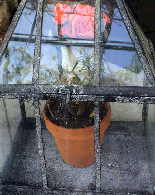 plant in glass house2