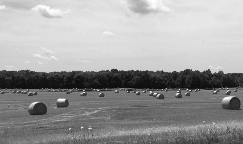 rolls of hay in Ohio blwh