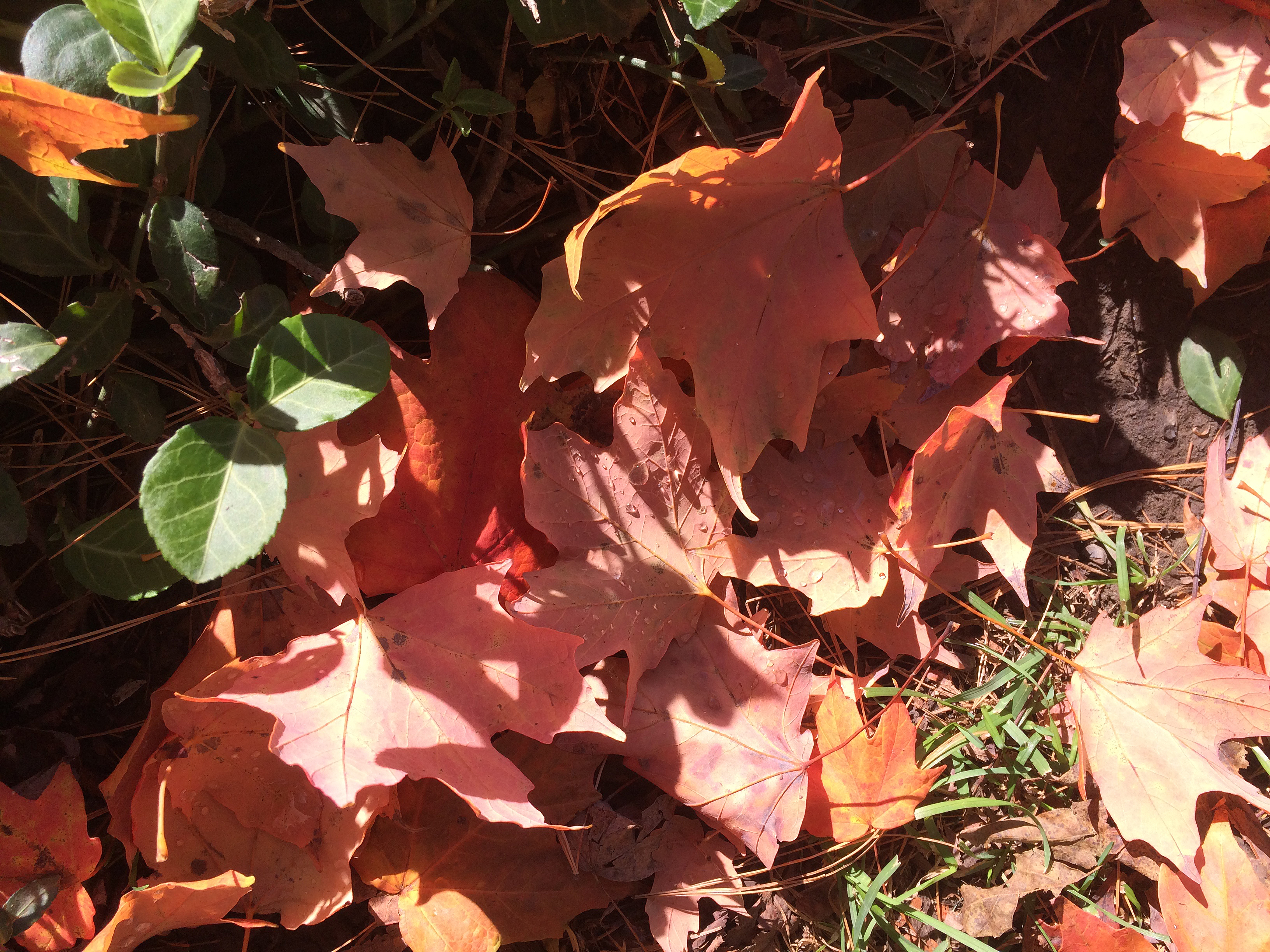 orange leaves1
