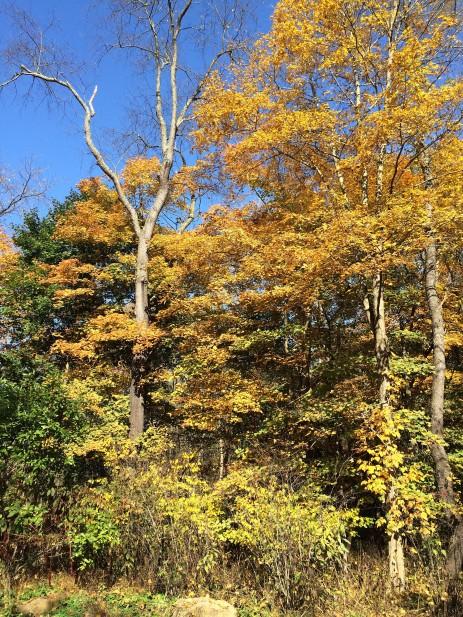 fall trees1