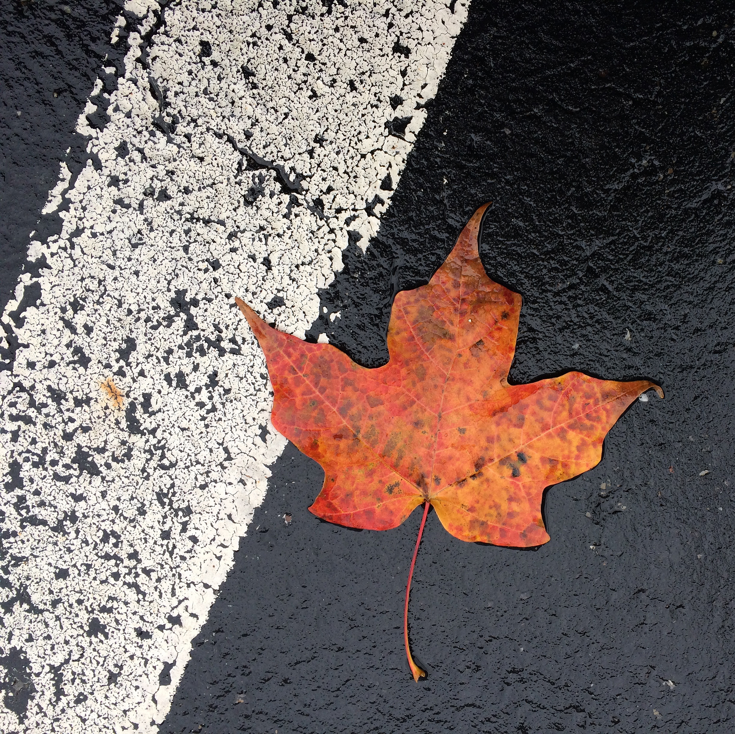 leaf on blacktop