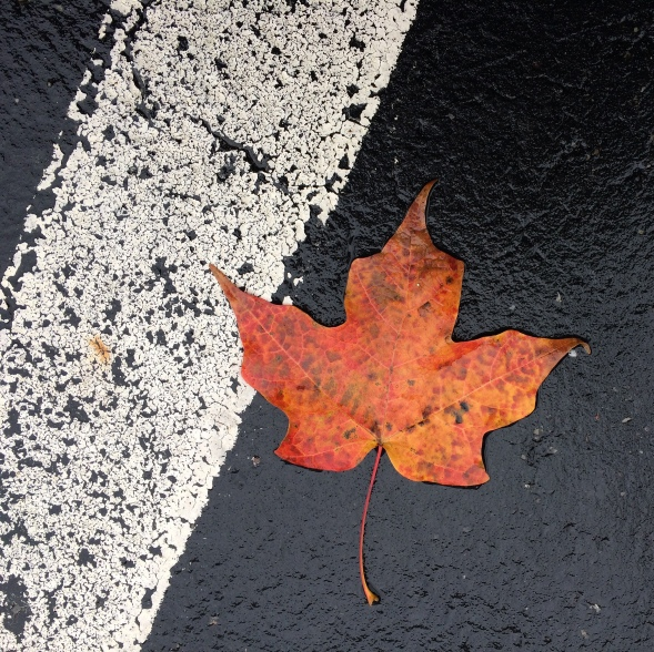 leaf on blacktop