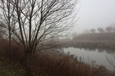 marsh in frost and fog.jpg