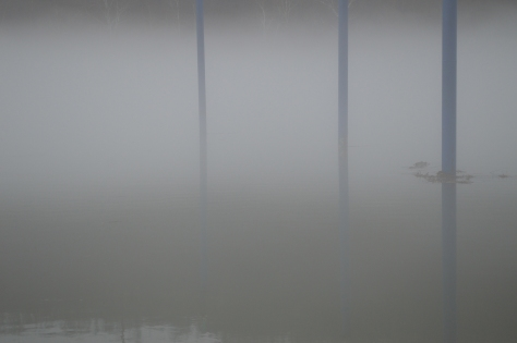 fog on the river w blue poles