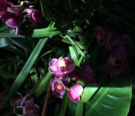 purple orchids in sun