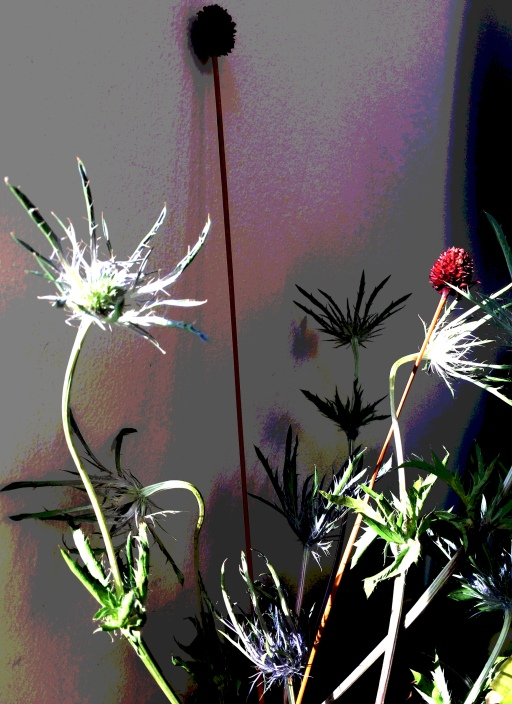 flowers against the wall 2