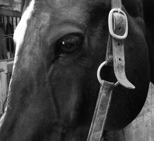 Finn's eye 2 blwh