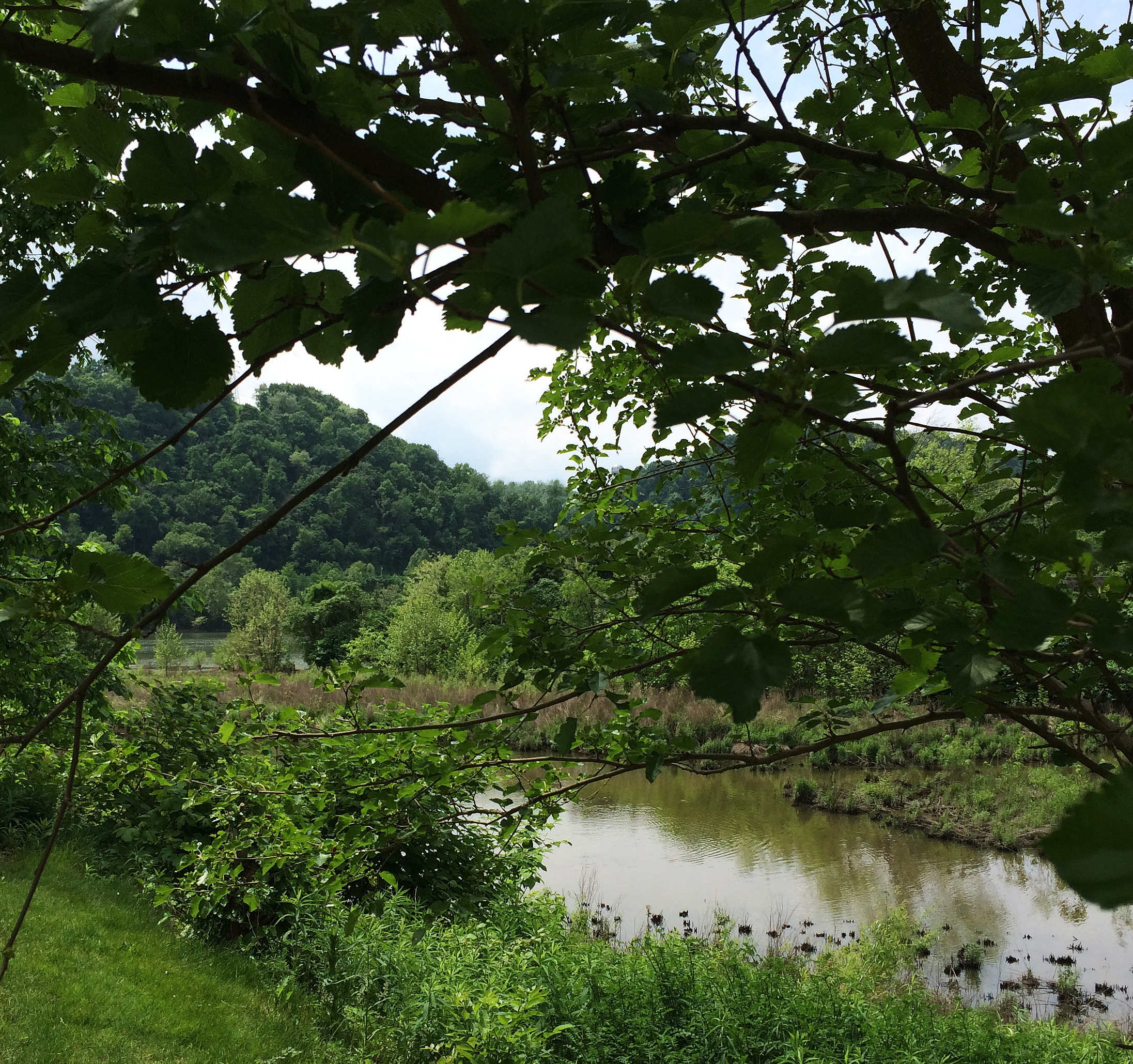 marsh in may