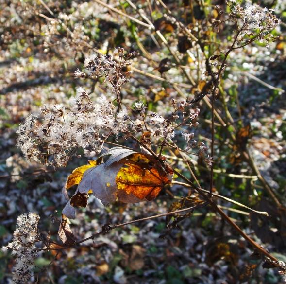 one leaf with sun