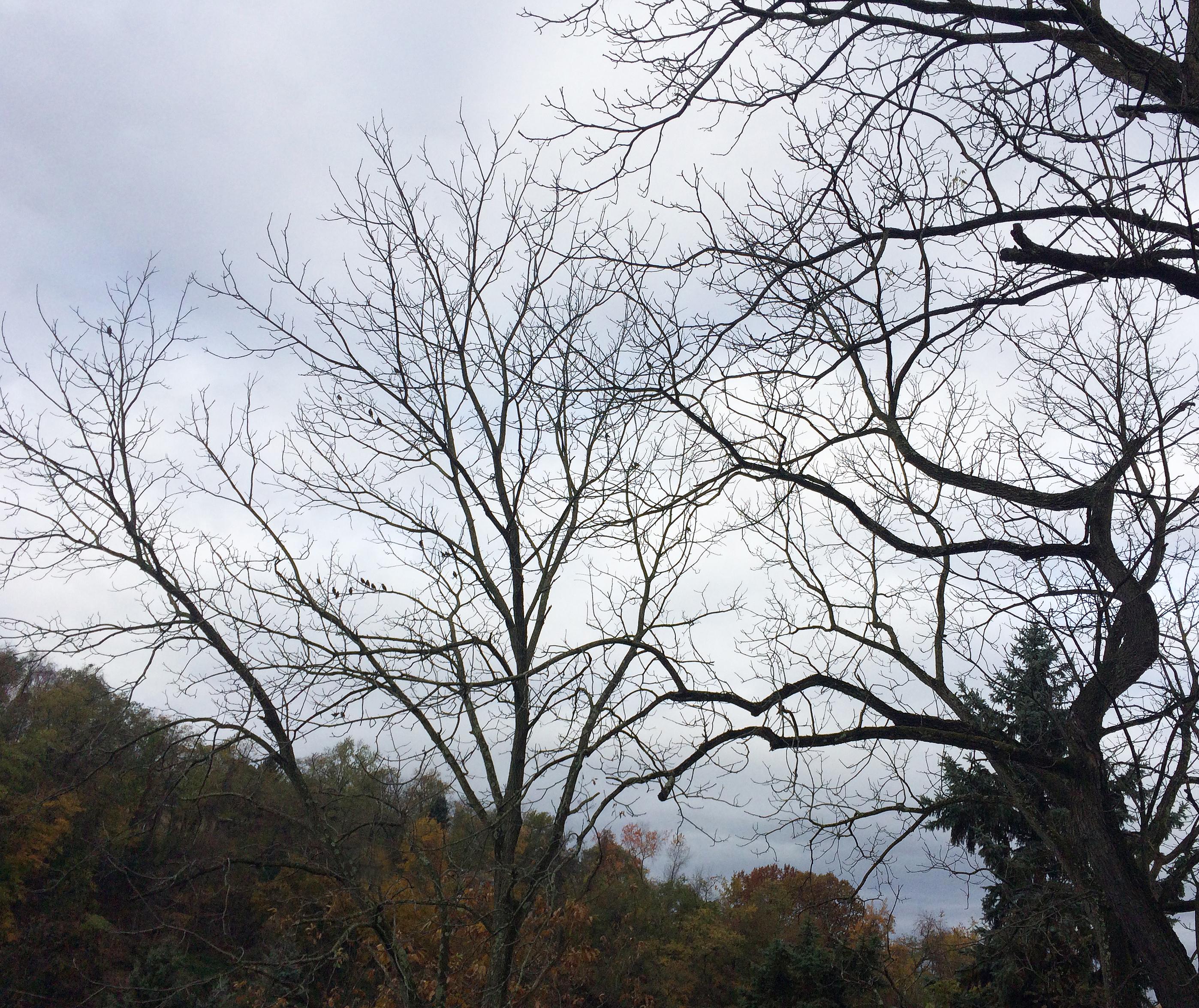 trees and grey skies