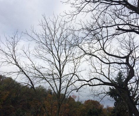 trees and grey skies