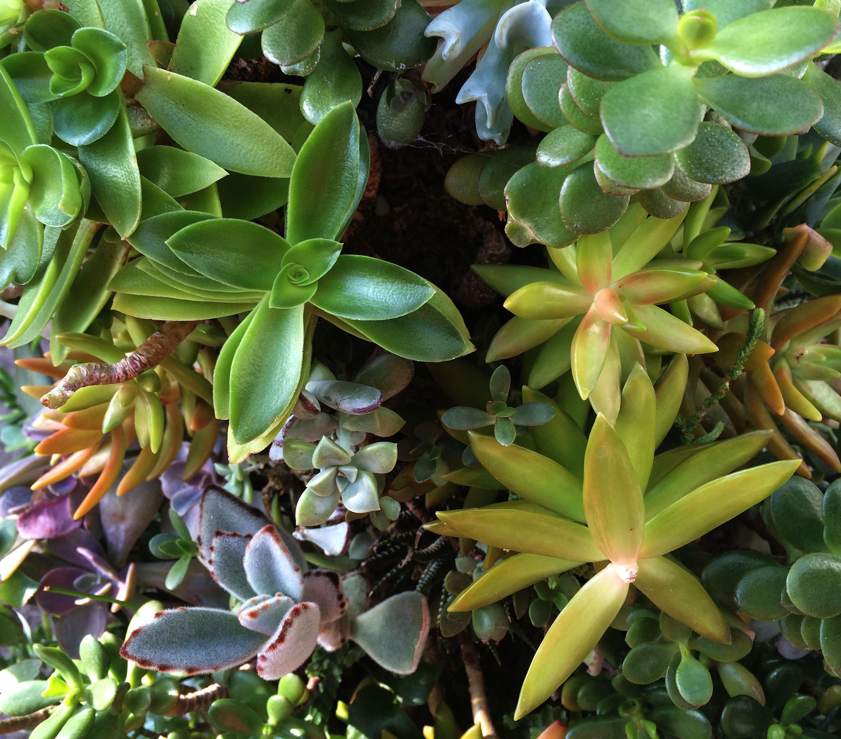 lots of succulents
