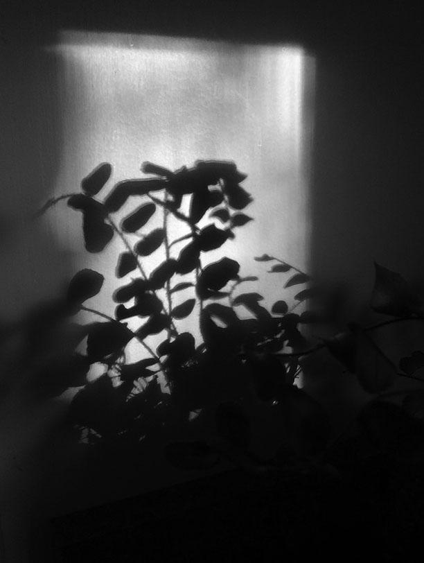blwh shadows of plants